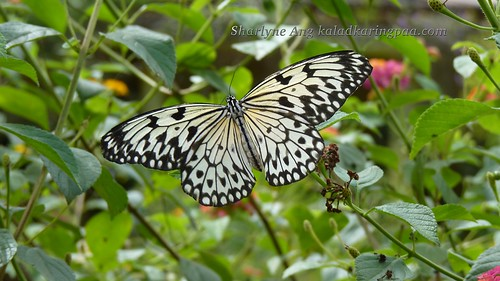 Butterfly Farm in Puerto Princesa 15