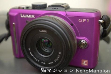 DSC_5844P 紫色gf1