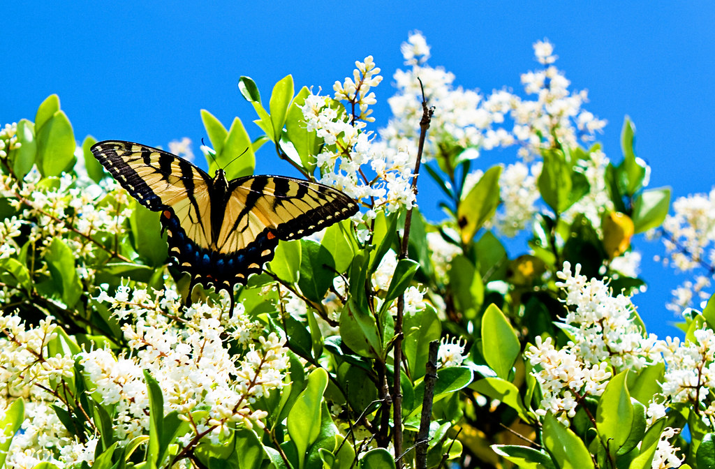Happiness is butterflies and blue skies...