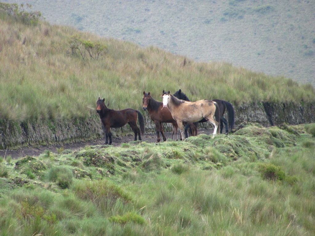 WILD horses: Stand-off!