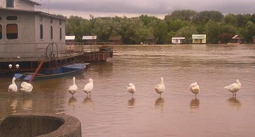 Sava river coming up - jun2010