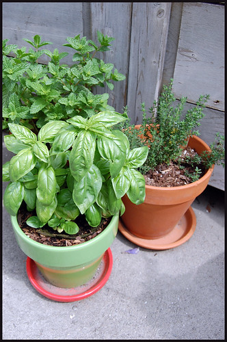 mint, basil, and thyme