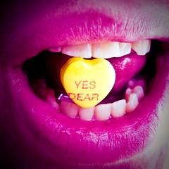 Yes Dear (45/365)