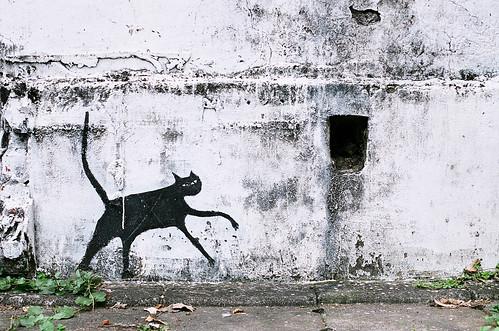 Danshui Cat