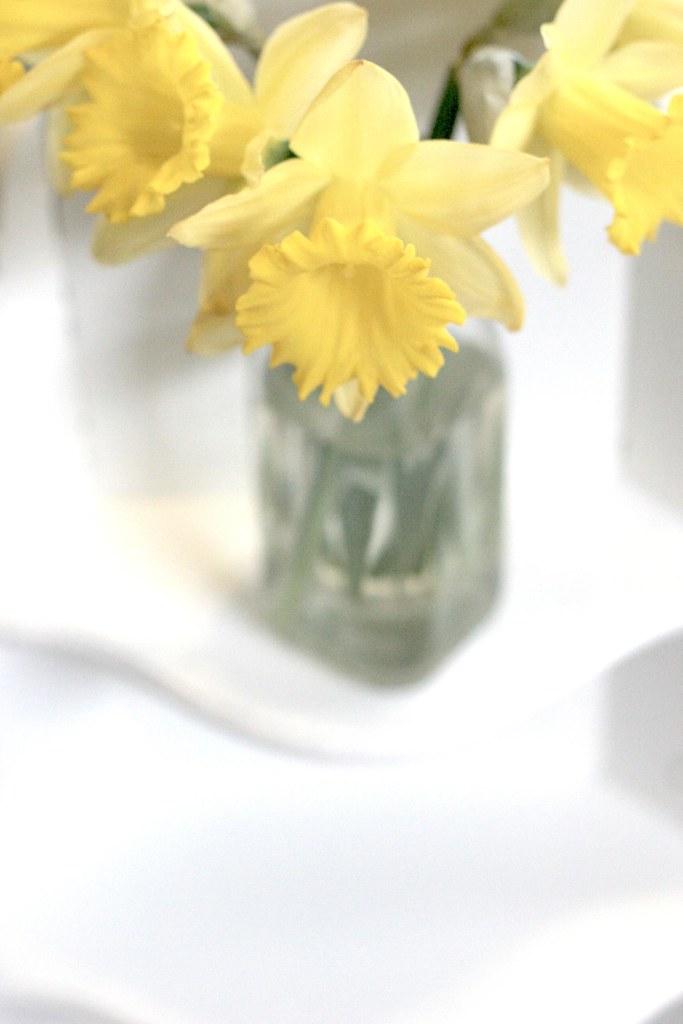 #3: daffodils from TJs