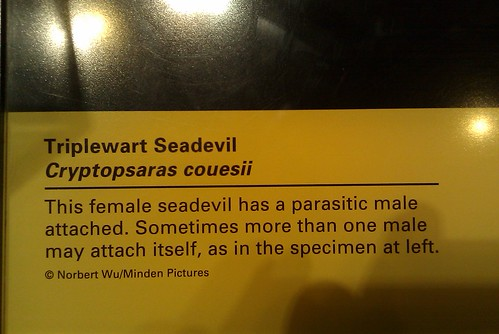 """Parasitic Male Attached"""