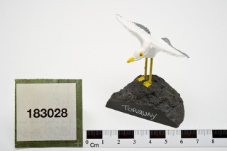 Seagull on a rock/unwanted birds