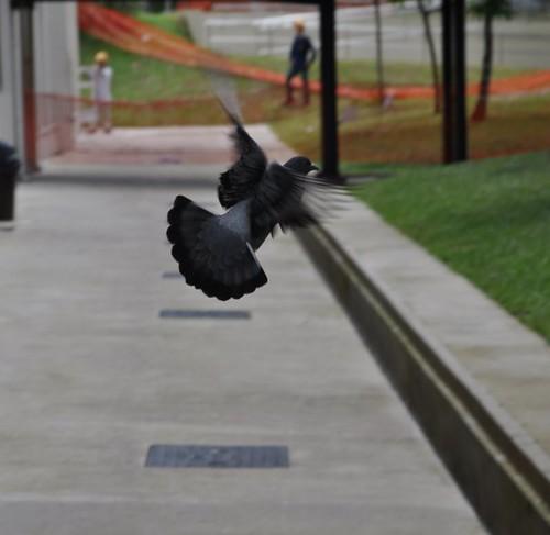 Bird in flight by Jose.jpg