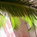 Zekka gets tropical