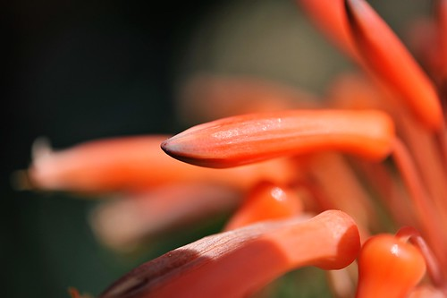 cactusflower12