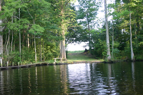 Paddling Perquiman County Blueway - Peaceful Spot