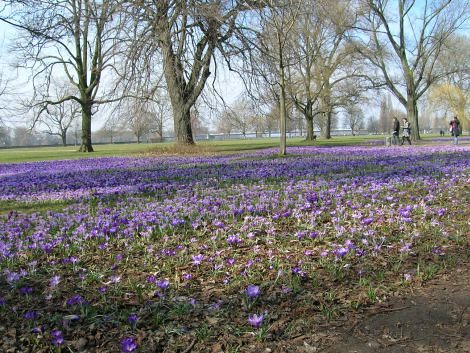 spring1_blog