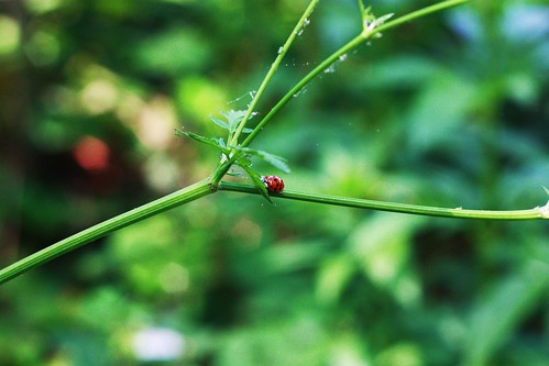 Ladybird and Stem 3