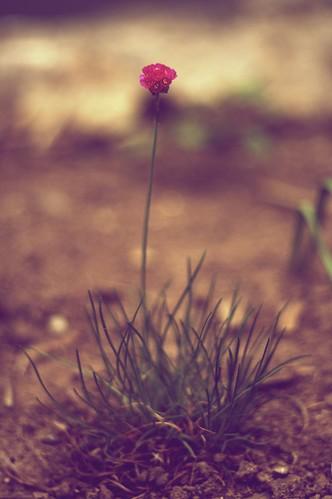 Porcupine Tree by Juuro on deviantART