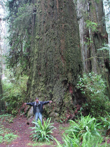 75 - Redwoods - 20100525
