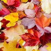 Leaf Art in your Backyard
