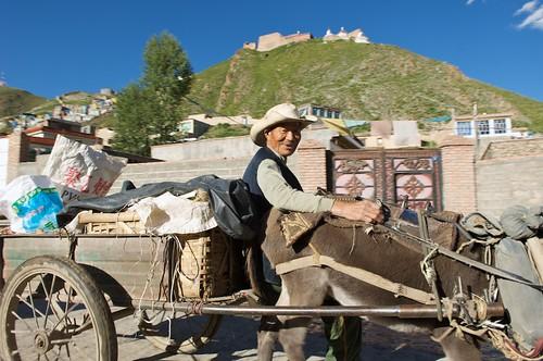 A happy man drives his donkey cart