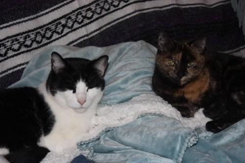 Kat & Kit