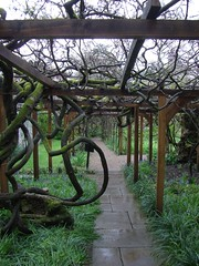 Wysteria covered pathways