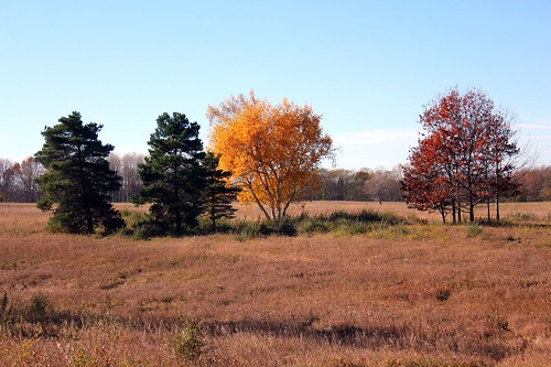 Autumn at Big Field