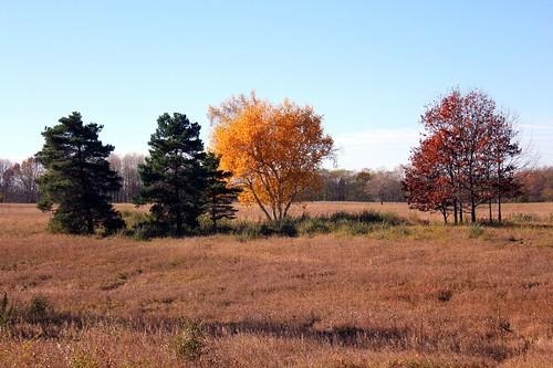 Autumn at Big Field