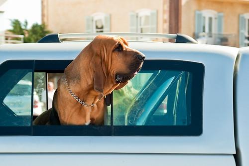 Back Seat Barker