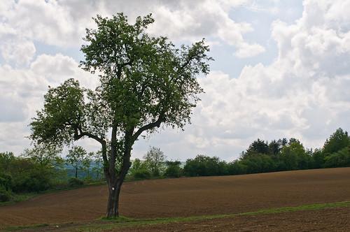 Jahreszeitenbaum im Mai