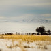 Foggy Winter Day in the Kittitas Valley