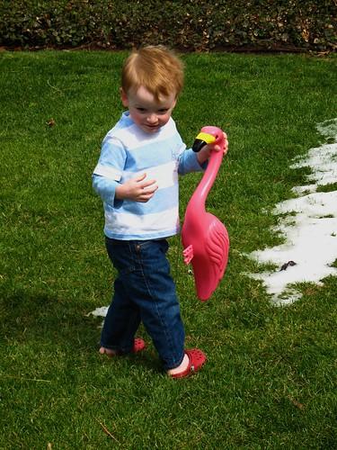 Boy & Flamingo