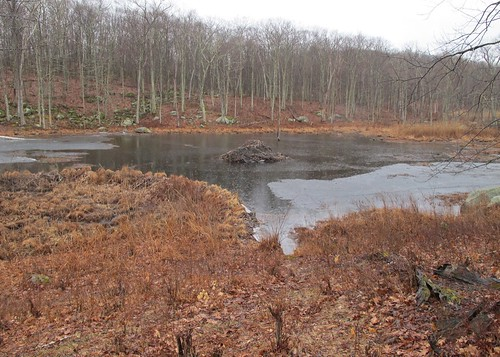 Main dam, den, pond