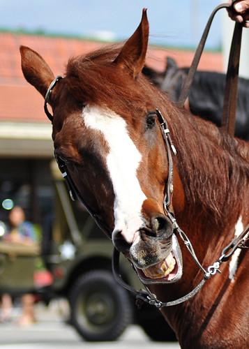horsey smile