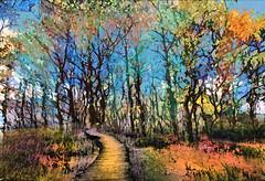 Twisty Forest Walk