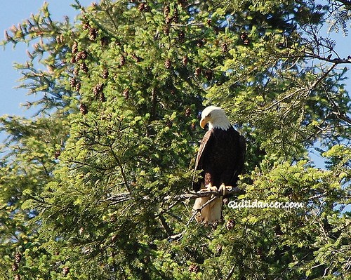 eagle 2