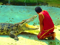 "The crocodile said ""Kiss me, please"""