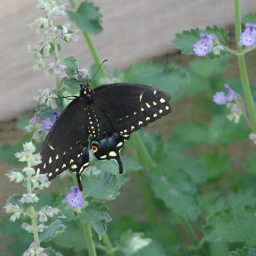 a butterfly at the Rio Grande Botanical Garden Butterfly Pavilion