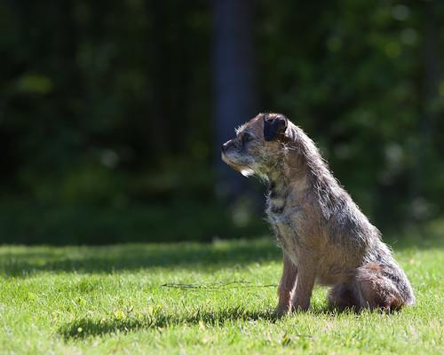 Herkko watching