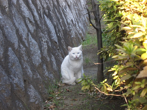 Asshole Cat of Tsutsujigaoka