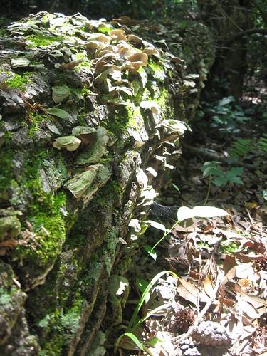 calvert cliffs - mushroom log