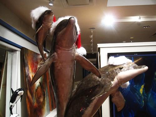 santa hat dolphins