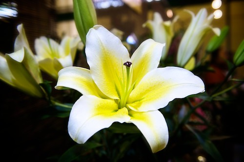 a giant lily blossom for sale at the Taipei Jianguo Flower Market