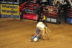 Professional Bull Riders  -  Madison Square Ga...