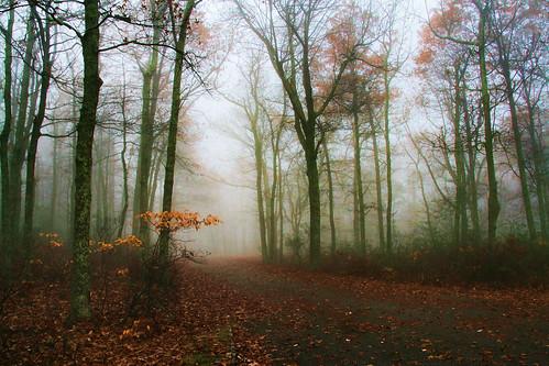 On an Early Autumn Morn