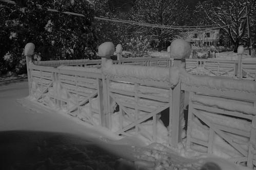 Garden Under Snow
