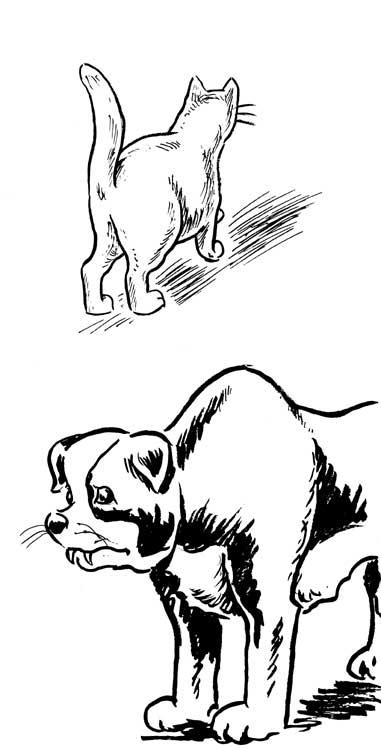 animals4