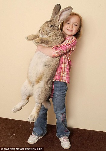 World biggest rabbit