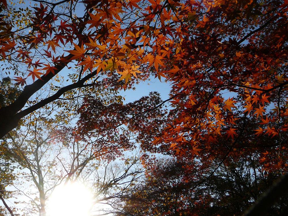 autumninyoyogi