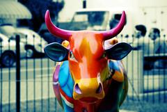 Vaca cómica