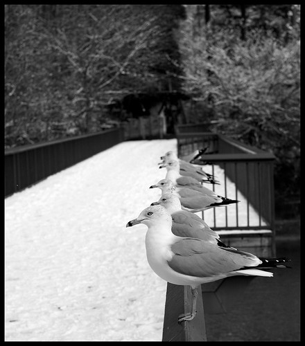 Get Your Seagulls In a Row.