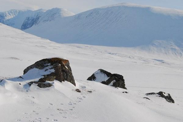 Pisadas de animales en Laponia