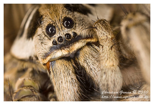"Araña • <a style=""font-size:0.8em;"" href=""http://www.flickr.com/photos/20681585@N05/4517692871/"" target=""_blank"">View on Flickr</a>"